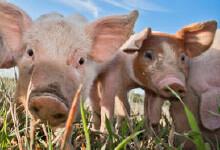 BioAktiv-V en BioAktiv Salis-V voor dieren