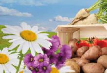 BioAktiv-P voor planten
