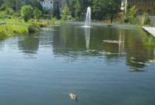 BioAktiv-W voor waterplassen en vijvers